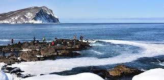 海面に輝く白い帯 余市で群来 今年初確認:北海道新聞 どうしん電子版